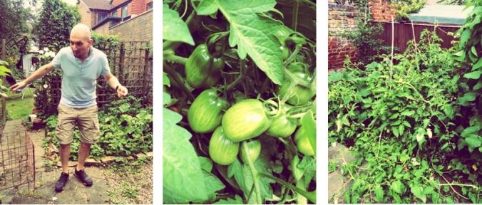 Tomato banner1